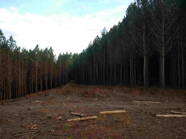 REF. 2162 Fazenda 30 alqs Reflorestamento, 40 alqs Plantio, 30 Alqs pasto, 20 Alqs APP - Foto 6