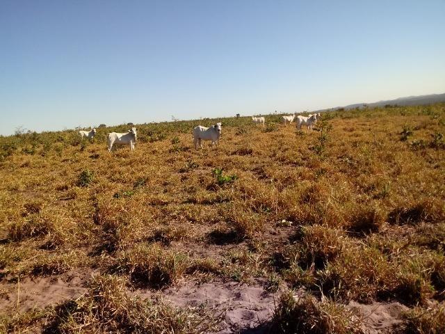 Fazenda de 1940 hectares, ha 60 km de Cuiabá, na região do manso - Foto 11