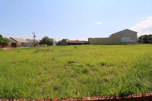 Terreno para alugar em Jardim colina verde, Maringa cod:L51431 - Foto 11