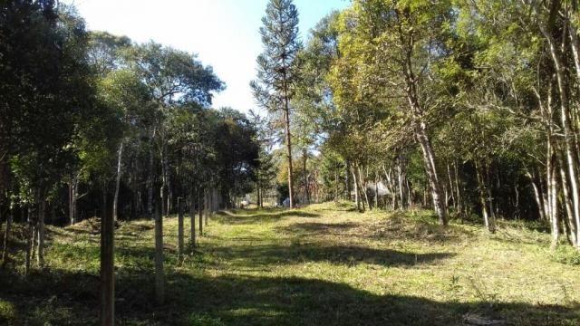 Chácara à venda, 6904 m², com 1 construção, loteamento areia branca dos nogueiras- mandiri - Foto 5