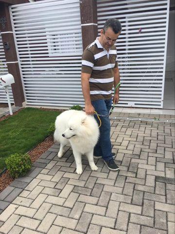 Educando seu cachorro - Foto 2