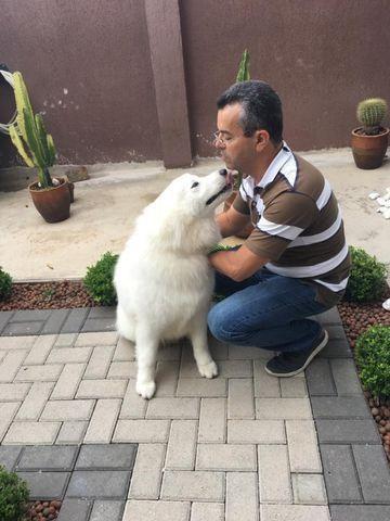 Educando seu cachorro