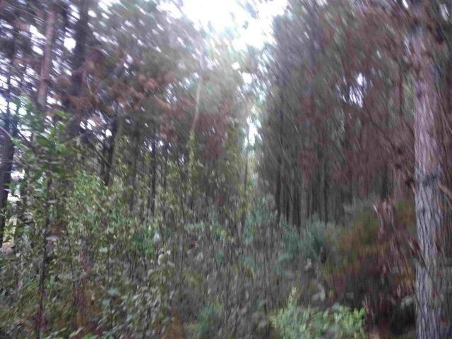 REF. 2162 Fazenda 30 alqs Reflorestamento, 40 alqs Plantio, 30 Alqs pasto, 20 Alqs APP - Foto 3