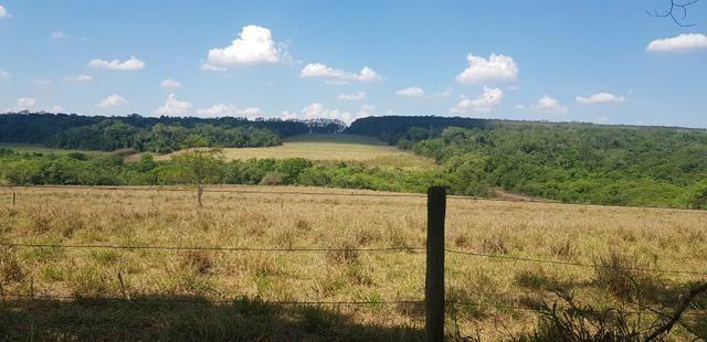 Fazenda 220 Alqueires - Foto 13