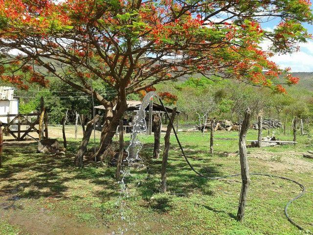 Fazenda 145 ha em Várzea da Palma/MG - Foto 20