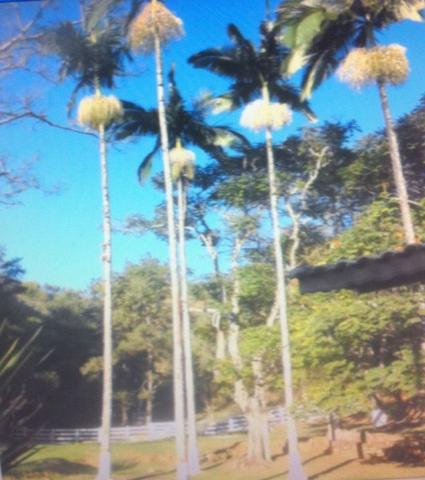 Fazenda em Pindamonhangaba - Foto 6