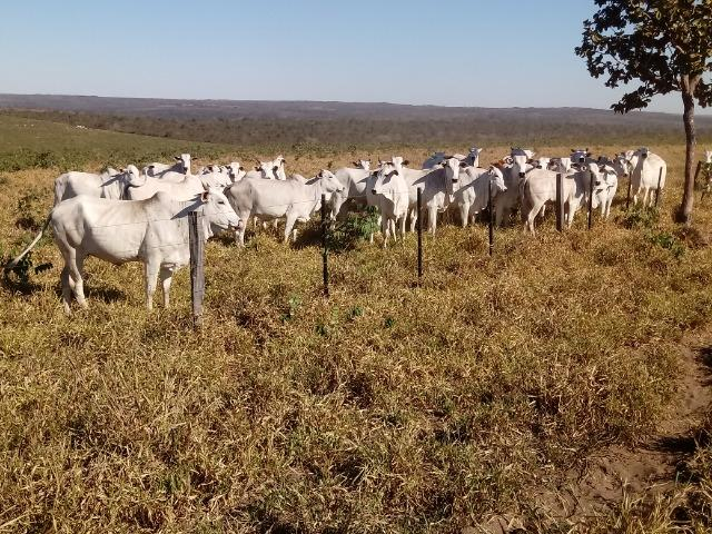 Fazenda de 1940 hectares, ha 60 km de Cuiabá, na região do manso - Foto 10