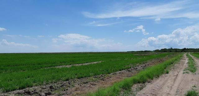 Fazenda 400ha Arrozeira C/Água Própria ou Pecuária no Litoral RS