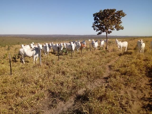 Fazenda de 1940 hectares, ha 60 km de Cuiabá, na região do manso - Foto 13
