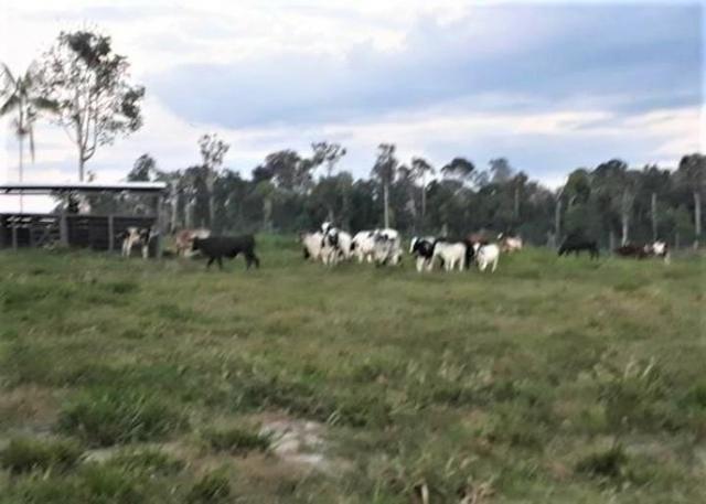 Vendo Fazenda em Novo Airão - Foto 7