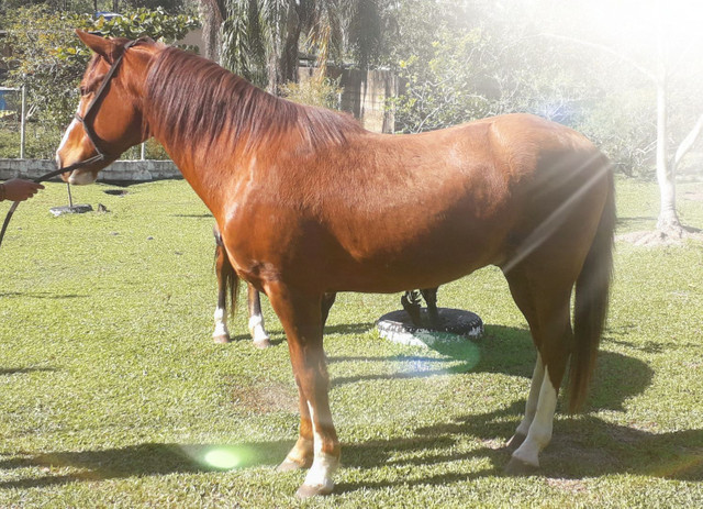 Cavalos - Foto 3