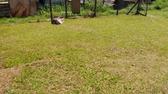 Barbada : Casa na Caiacanga, Ribeirão da Ilha, com 3 dormitórios, área de 650m² - Foto 19