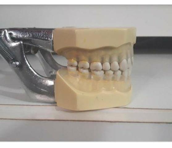 Manequim de Periodontia /Odontologia