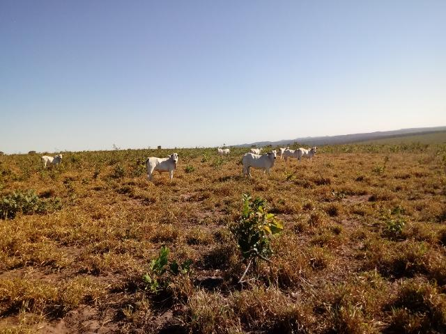 Fazenda de 1940 hectares, ha 60 km de Cuiabá, na região do manso - Foto 8