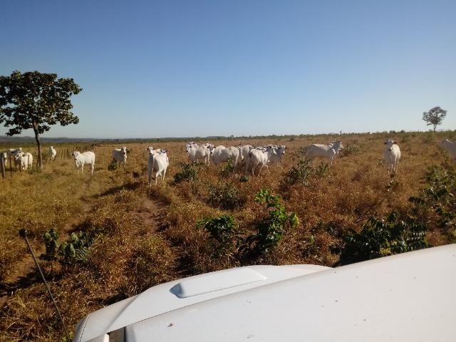 Fazenda de 1940 hectares, ha 60 km de Cuiabá, na região do manso - Foto 6