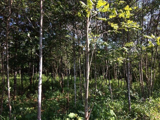 Vendo Fazenda com bem feituria de 42 hectares em Bacabeira, KM 53 da BR -135