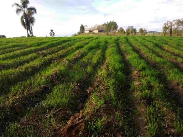 REF. 2162 Fazenda 30 alqs Reflorestamento, 40 alqs Plantio, 30 Alqs pasto, 20 Alqs APP - Foto 4