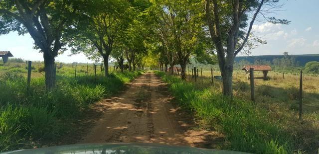 Fazenda 220 Alqueires - Foto 14