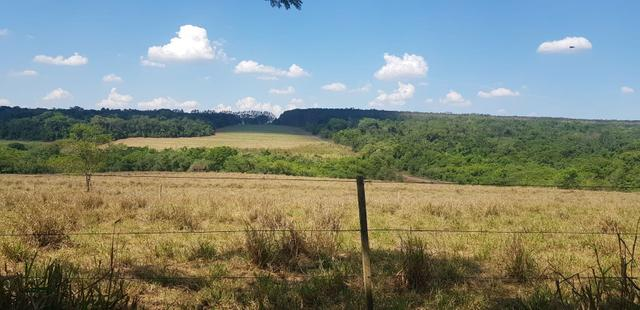 Fazenda 220 Alqueires - Foto 15