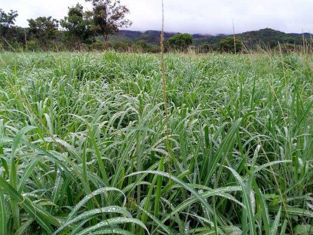 Fazenda 145 ha em Várzea da Palma/MG - Foto 15