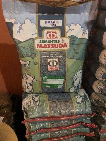 Sementes Braúna - MATSUDA 10kg