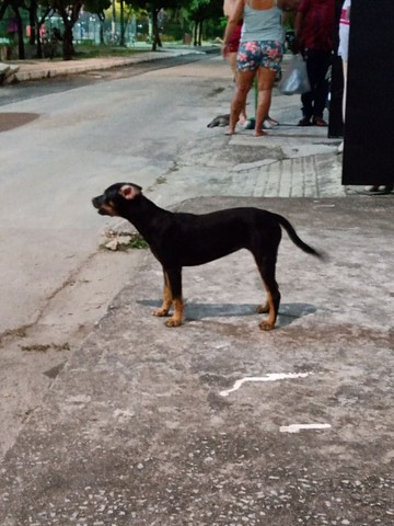 Cachorro Doação - Foto 3