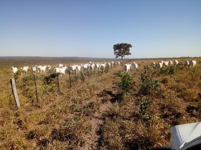Fazenda de 1940 hectares, ha 60 km de Cuiabá, na região do manso - Foto 9
