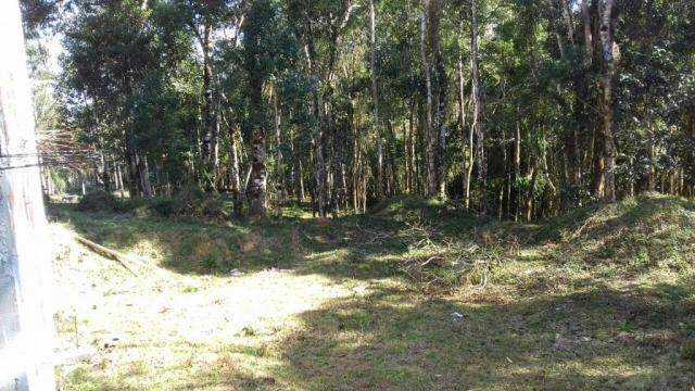 Chácara à venda, 6904 m², com 1 construção, loteamento areia branca dos nogueiras- mandiri - Foto 13
