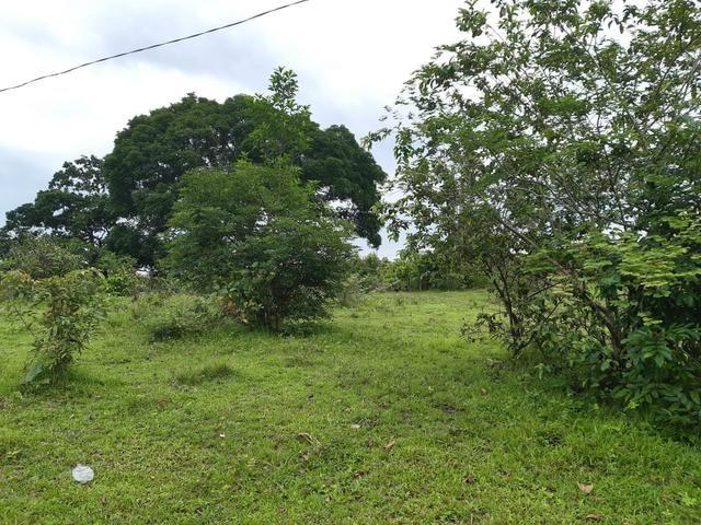 Terreno bem localizado - Foto 5