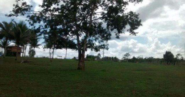 Arrendamento - Fazenda com 82 ha, Una-BA - Foto 8