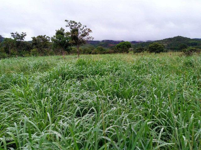 Fazenda 145 ha em Várzea da Palma/MG - Foto 10