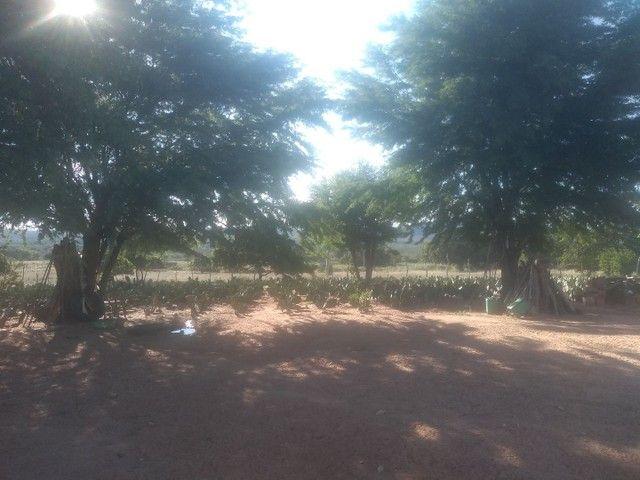 Terreno em ibimirim Pernambuco - Foto 3