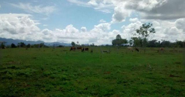Arrendamento - Fazenda com 82 ha, Una-BA - Foto 6
