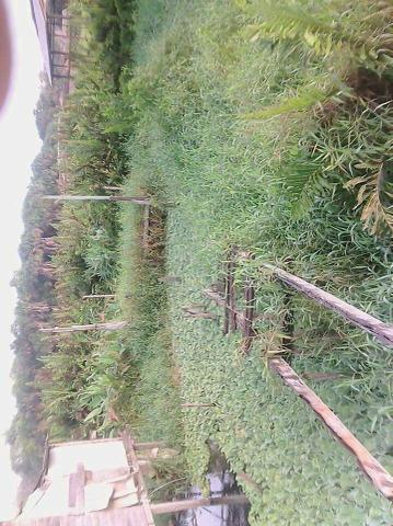 Vendo esse terreno no bairro novo Buritizal