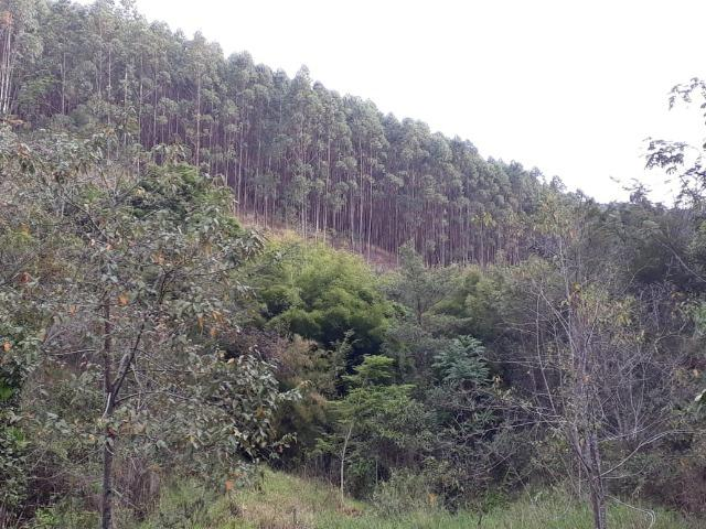 Fazenda em Pindamonhangaba - Foto 12