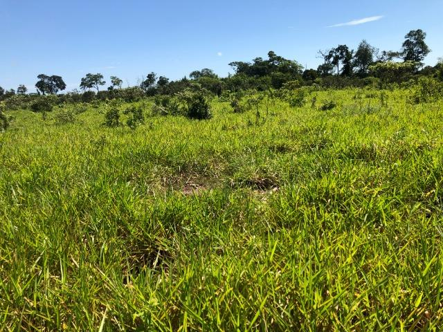 12 alqueires gleba ariranha, aceito permuta imóveis em Tangará - Foto 5