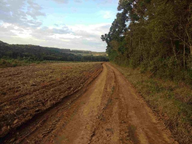 REF. 2162 Fazenda 30 alqs Reflorestamento, 40 alqs Plantio, 30 Alqs pasto, 20 Alqs APP - Foto 5