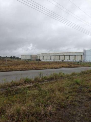 Área comercial para locação com 5.100 m², Audi, São José dos Pinhais. - Foto 3
