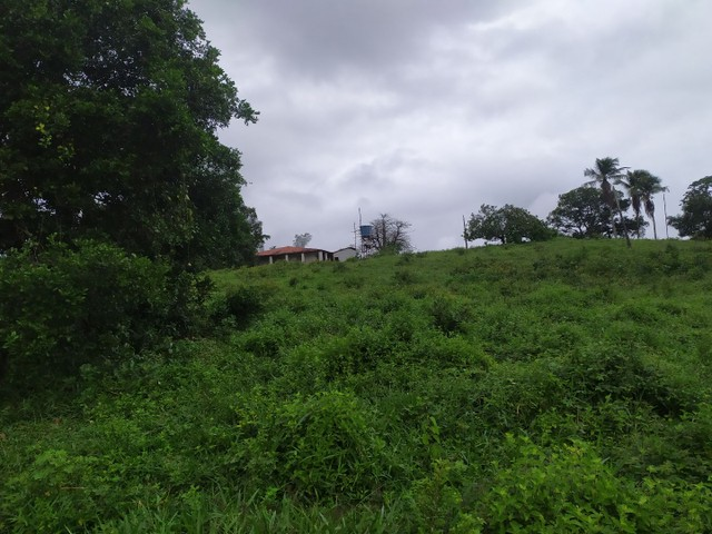 Salgado Pov Moendas Casa grande + 8 Tarefas + tanque - Foto 14