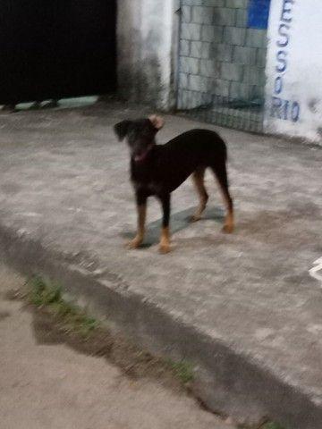 Cachorro Doação - Foto 2