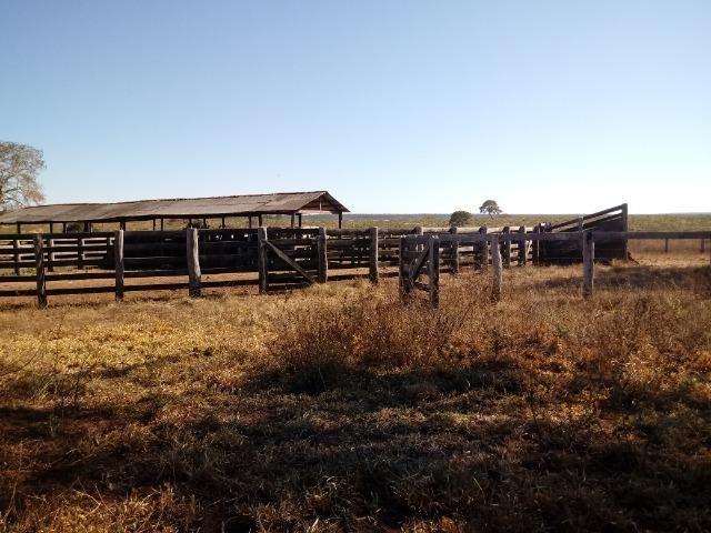 Fazenda de 1940 hectares, ha 60 km de Cuiabá, na região do manso - Foto 7