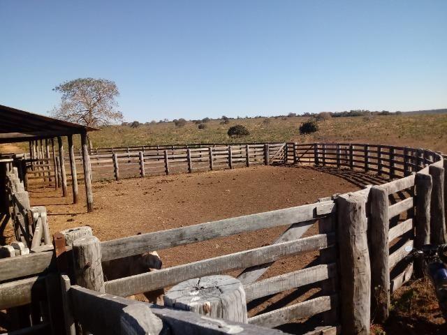 Fazenda de 1940 hectares, ha 60 km de Cuiabá, na região do manso - Foto 5