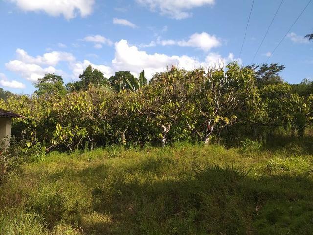 Vendo fazenda em Itamari ba - Foto 3