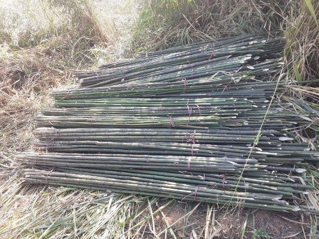 Vendo bambu para todos tipos de trabalho bambu cana de india e bambu comum - Foto 5