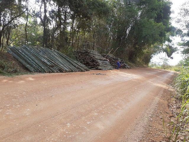 Vendo bambu para todos tipos de trabalho bambu cana de india e bambu comum - Foto 3