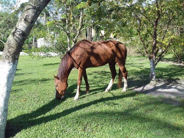 Cavalos - Foto 4