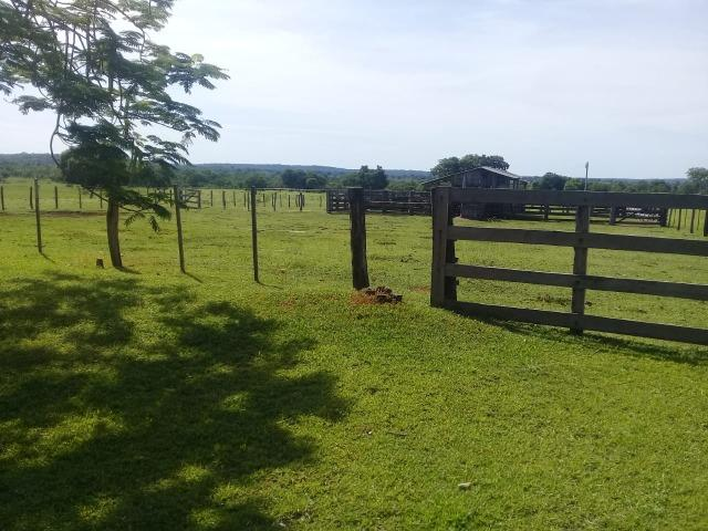 Fazenda top toda formada de 240 hectares a 100km de Várzea Grande