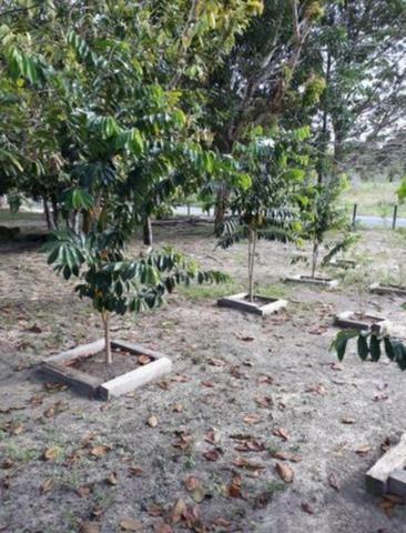 Vendo Fazenda em Novo Airão - Foto 11