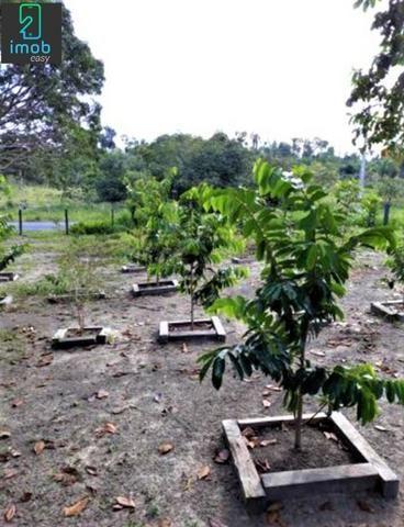Vendo Fazenda em Novo Airão - Foto 13
