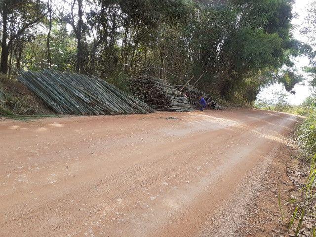 Vendo bambu para todos tipos de trabalho bambu cana de india e bambu comum - Foto 2
